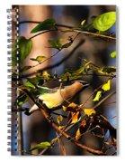 Cedar Waxwing Preparing To Fly Spiral Notebook