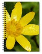 Celandine Spiral Notebook