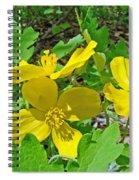 Celandine Poppy Or Wood Poppy - Stylophorum Diphyllum Spiral Notebook