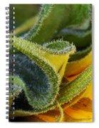Celebration Sunflower Spiral Notebook