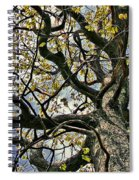 Cemetery Oak Spiral Notebook