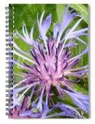 Centaurea Montana Blue Flower Spiral Notebook