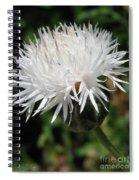 Centaurea Named The Bride Spiral Notebook
