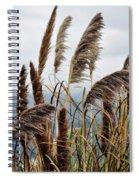 Central Coast Pampas Grass Spiral Notebook