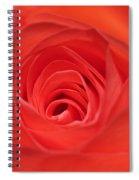 Centre Of A Rose Spiral Notebook