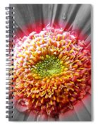 Centre Of Beauty Spiral Notebook