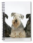 Cesky Terrier Dogs Spiral Notebook