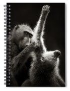 Chacma Baboons Grooming Spiral Notebook