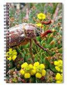 Chafer Beetle On Medusa Succulent Spiral Notebook
