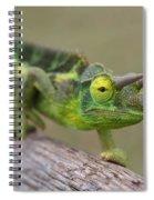 Chamaeleo Jacksonii Ulupalakua Maui Hawaii Spiral Notebook