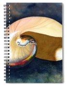 Chambered Nautilus Spiral Notebook