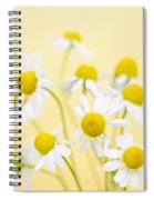 Chamomile Flowers Close Up Spiral Notebook