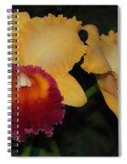 Chan Hsiu Gold Spiral Notebook
