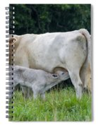 Charolais Cattle Nursing Young Spiral Notebook