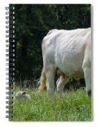 Charolais Cow And Calf In Field Spiral Notebook