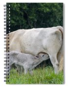 Charolais Cow Nursing Calf Spiral Notebook