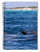 Chasing Dolphins  Spiral Notebook