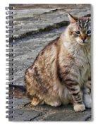 Chat Spiral Notebook