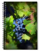Chateauneuf Du Pape Hidden Treasure Spiral Notebook