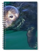 Chatham Harbor Seal Spiral Notebook