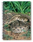 Checkered Garter Snake Spiral Notebook