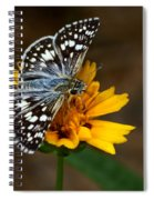 Checkered Skipper Square Spiral Notebook