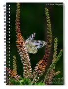 Checkered White On An Indigo Spiral Notebook