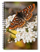 Checkerspot Butterfly On A Yarrow Blossom Spiral Notebook
