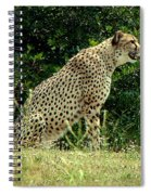 Cheetah-79 Spiral Notebook