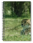 Cheetah At Attention Spiral Notebook