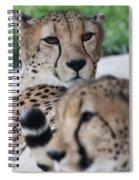 Cheetah Awakening Spiral Notebook