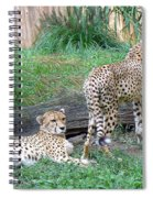 Cheetah Brothers  Spiral Notebook