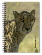 Cheetah Gaze Spiral Notebook