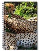 Cheetah - Masai Mara - Kenya Spiral Notebook