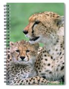 Cheetah Mother And Cub Spiral Notebook