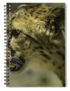 Cheetah On The Prowl Spiral Notebook
