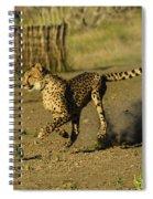 Cheetah On The Run Spiral Notebook