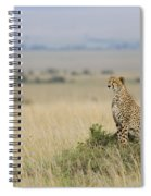 Cheetah Perched On A Mound Spiral Notebook
