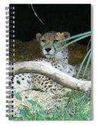 Cheetah Resting  Spiral Notebook