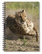 Cheetah Run 2 Spiral Notebook