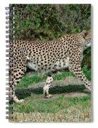 Cheetah Strolling Spiral Notebook