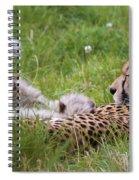 Cheetah With Cubs Spiral Notebook