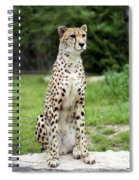 Cheetah's 01 Spiral Notebook
