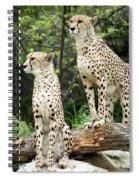 Cheetah's 02 Spiral Notebook