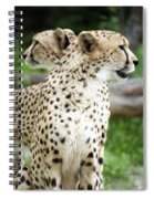 Cheetah's 04 Spiral Notebook