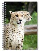 Cheetah's 05 Spiral Notebook