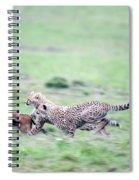Cheetahs Acinonyx Jubatus Chasing Spiral Notebook