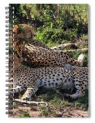 Cheetahs Of The Masai Mara Spiral Notebook