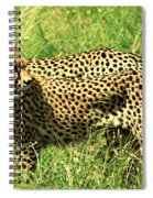 Cheetahs Running Spiral Notebook
