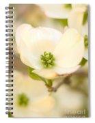Cherokee Princess Dogwood Blossom In Beige Spiral Notebook